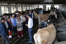 गाई पालन अवलोकन गर्दै चितवनमा
